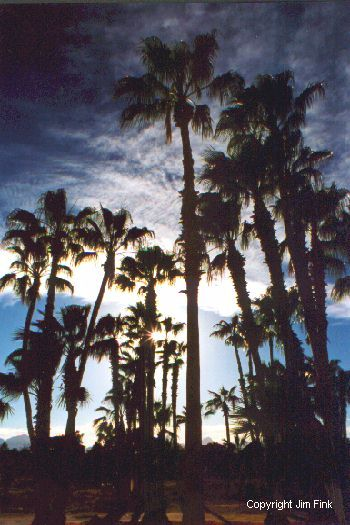 Sunset Behind Palms at Loreto, Baja