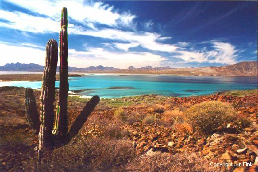 Cardon Cactus Overlooks Tropical Bay at Loreto, Baja California
