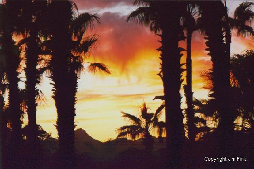 Baja Palms at Sunset
